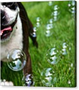 Bubble Busting Acrylic Print