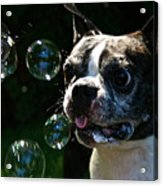 Bubble Monster Acrylic Print