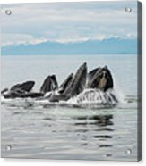 Bubble-net Group With Mountains In Alaska Acrylic Print