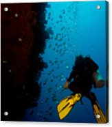 Bubbles And Butterfly Fish Acrylic Print