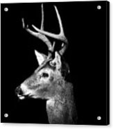 Buck In Black And White Acrylic Print by Malcolm MacGregor