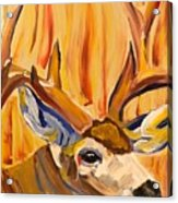 Buck In Fiery Sunset Acrylic Print