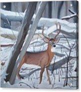 Buck In The Snow Acrylic Print