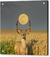Buck Moon  Acrylic Print