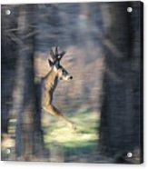 Buck Running Thru The Woods Acrylic Print