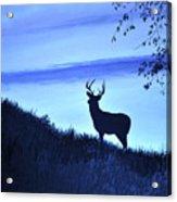 Buck Silhouette In Blue Acrylic Print