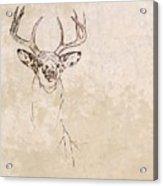 Buck Unfinished Art Acrylic Print