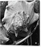 Bucket Of Sea Shells Acrylic Print