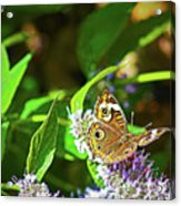 Buckeye Butterfly On The Move 1 Acrylic Print