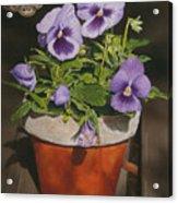 Buckeye Acrylic Print