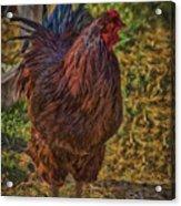 Buckeye In The Barnyard Acrylic Print