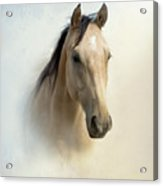 Buckskin Beauty Acrylic Print