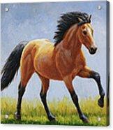 Buckskin Horse - Morning Run Acrylic Print by Crista Forest