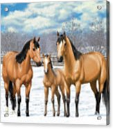 Buckskin Horses In Winter Pasture Acrylic Print by Crista Forest
