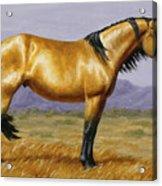 Buckskin Mustang Stallion Acrylic Print