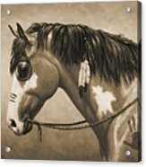 Buckskin War Horse In Sepia Acrylic Print by Crista Forest