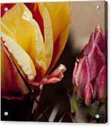 Bud To Blossom Acrylic Print