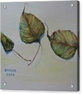 Buddha Leaf 1 Acrylic Print