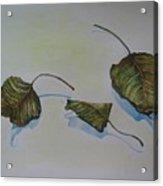 Buddha Leaf 2 Acrylic Print