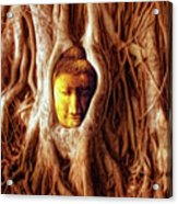 Buddha Of The Banyan Tree Acrylic Print