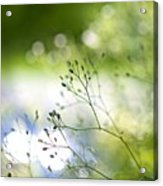 Budding Plant Acrylic Print
