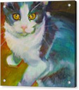Buddy The Cat Acrylic Print