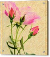 Buds And Bloom - Rose Floral Acrylic Print