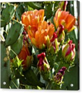 Buds N Blossoms Acrylic Print