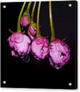 Buds Acrylic Print