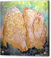 Buff Orpington Hens In The Garden Acrylic Print