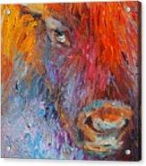Buffalo Bison Wild Life Oil Painting Print Acrylic Print