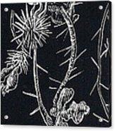 Buffalo Burr And Toad Acrylic Print