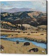 Buffalo By A Stream Acrylic Print