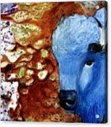 Buffalo Dreams Acrylic Print
