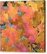 Buffalo Fall Leaves Acrylic Print