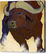 Buffalo Fury Acrylic Print