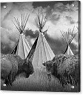 Buffalo Herd Among Teepees Of The Blackfoot Tribe Acrylic Print
