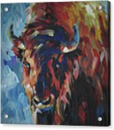 Buffalo In Blue Acrylic Print