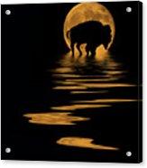Buffalo In The Moonlight Acrylic Print