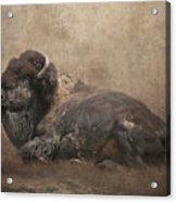 Buffalo Acrylic Print by Lynn Jackson