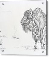 Buffalo Mom And Calves Acrylic Print