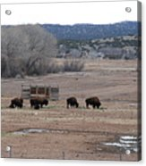 Buffalo New Mexico Acrylic Print