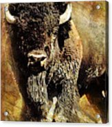 Buffalo Poster Acrylic Print