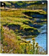 Buffalo River Bank Acrylic Print