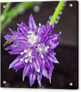 Bug Chilling Chive Acrylic Print