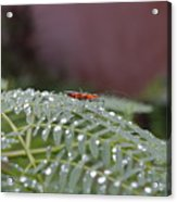 Bug Homestead Acrylic Print