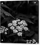 Bug On Flowers Black And White Acrylic Print