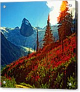 Bugaboos Evening Buzz Acrylic Print