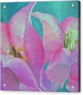 Bugenvila Acrylic Print