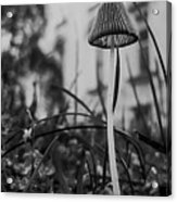 Bug's Eye View Acrylic Print